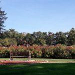 Bench at the San José Municipal Rose Garden